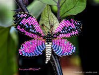 Butterfly: Fusia, Purple & Black